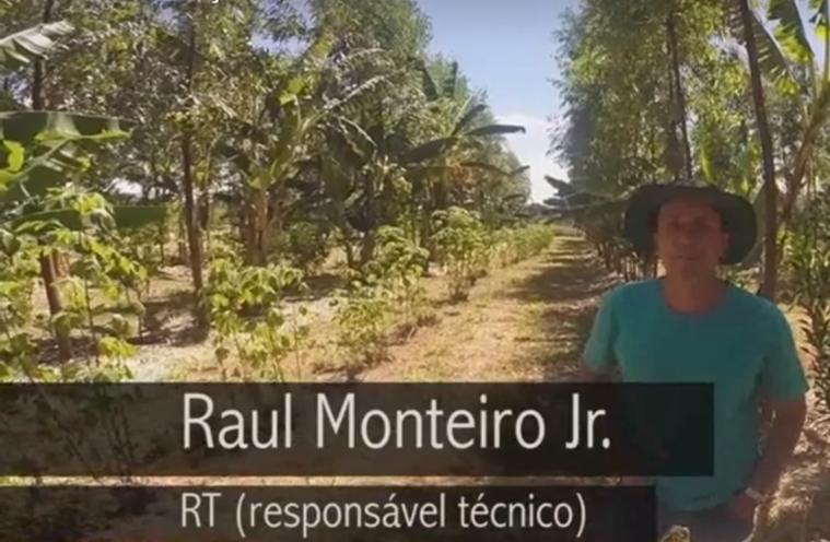 Video AGROFLORESTA NO CERRADO (Food-forest in the brazilian savanna)